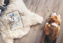 Laminate flooring vs Carpet: Which is better?